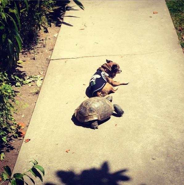 22 mejores amigos tortuga de 50 años y perrita adoptados por actriz van a todos lados