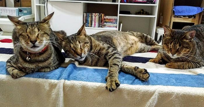 3 gatos ciegos 1