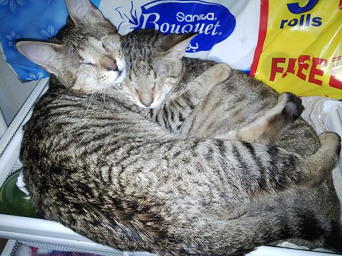 3 gatos ciegos 11
