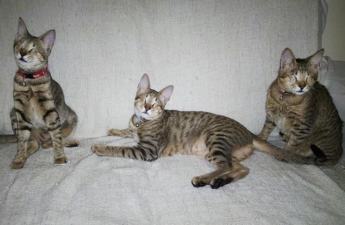 3 gatos ciegos 2
