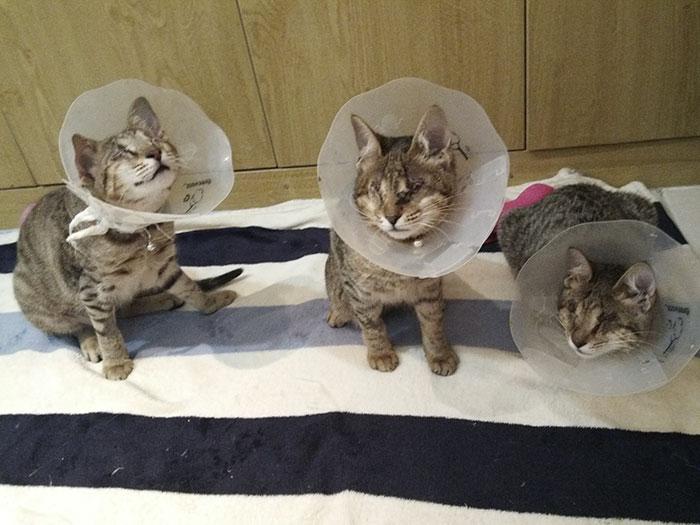 3 gatos ciegos 4