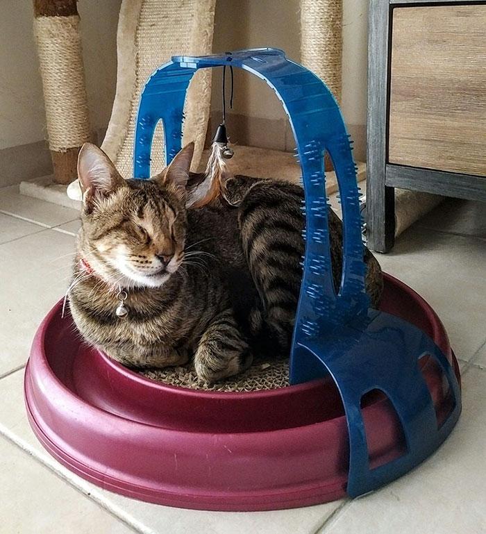 3 gatos ciegos 7