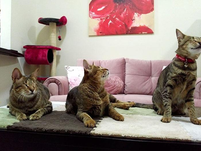 3 gatos ciegos 8