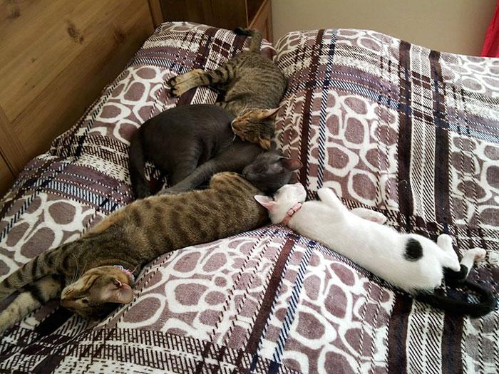 3 gatos ciegos 9