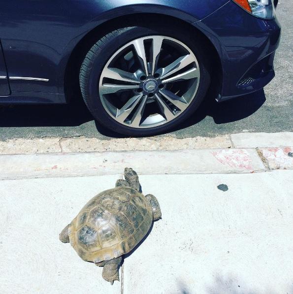 3 mejores amigos tortuga de 50 años y perrita adoptados por actriz van a todos lados