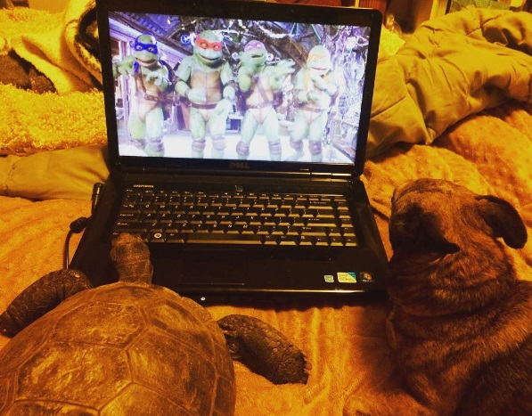 5 mejores amigos tortuga de 50 años y perrita adoptados por actriz van a todos lados