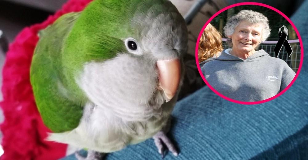 600-aves-buscan-refugio-canada-muerte-duena