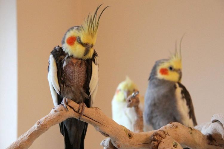 600-aves-refugio-canada 3