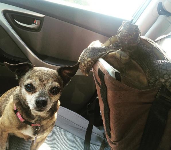 7 mejores amigos tortuga de 50 años y perrita adoptados por actriz van a todos lados