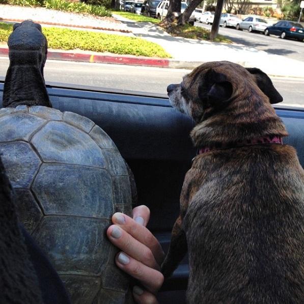8 mejores amigos tortuga de 50 años y perrita adoptados por actriz van a todos lados