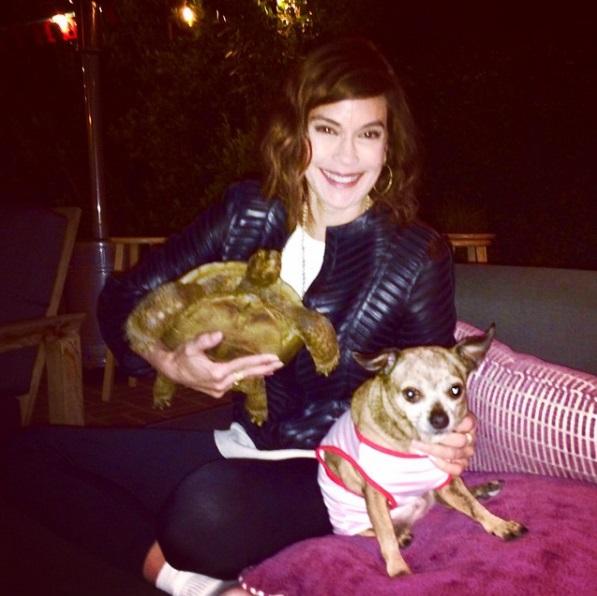9 mejores amigos tortuga de 50 años y perrita adoptados por actriz van a todos lados