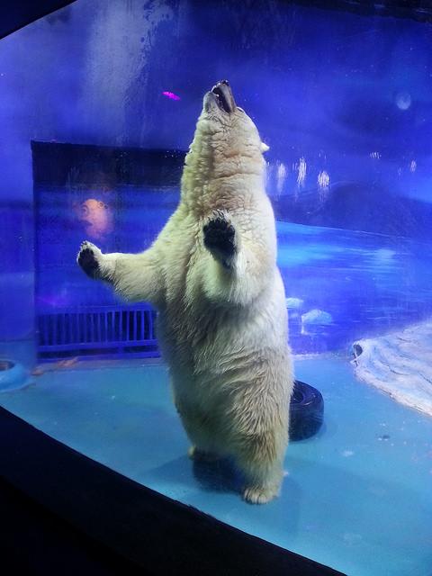 Animals-Asia-oso-polar 1