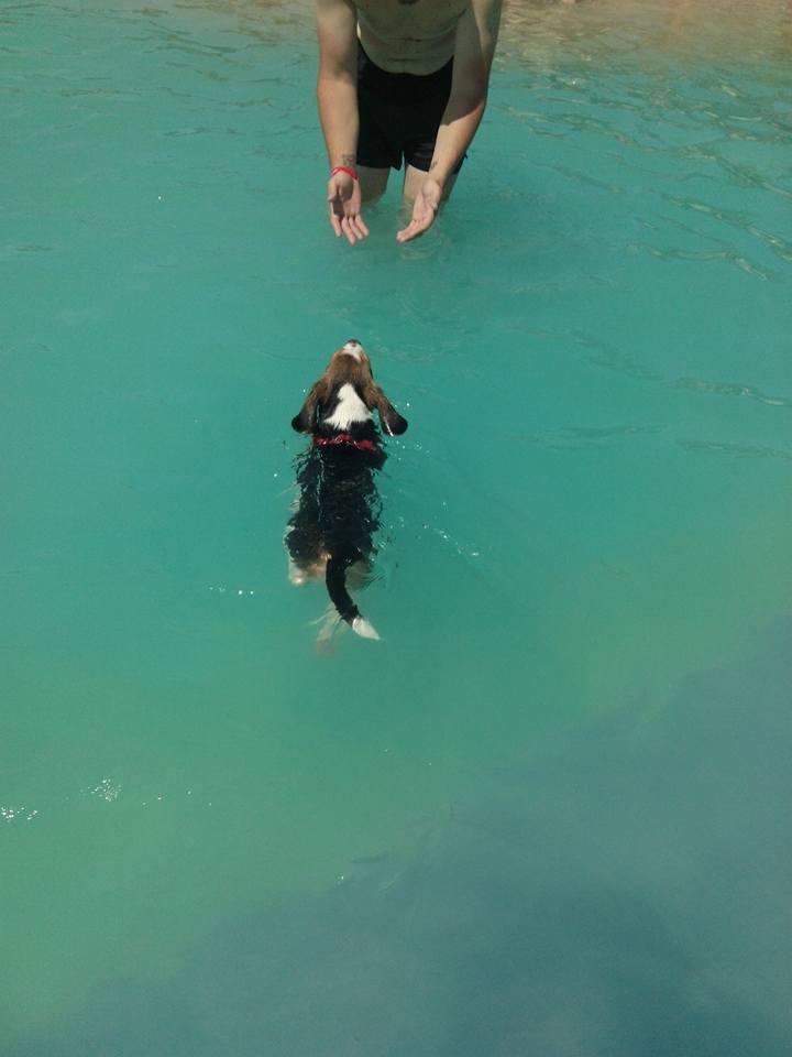 Aquapark-canino 2
