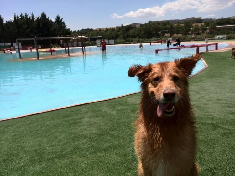 Aquapark-canino 4