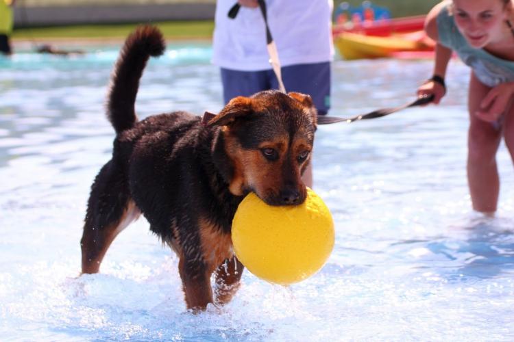Aquapark-canino 9
