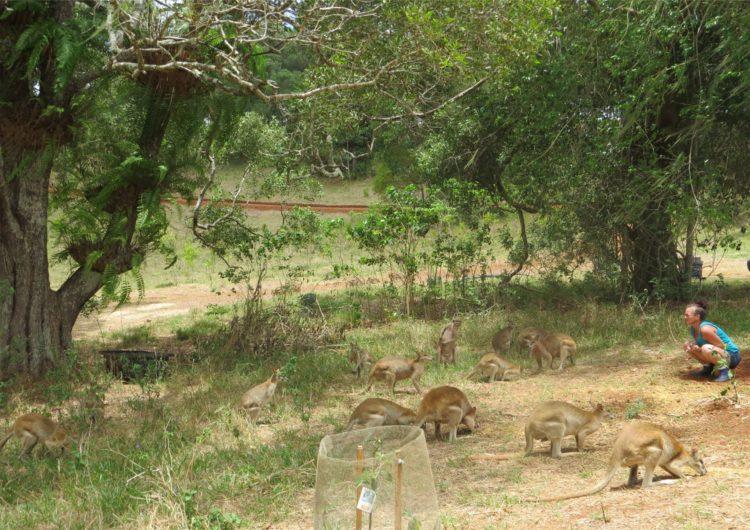Australiana-cuida-canguros 13