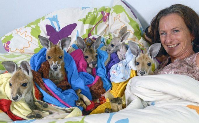 Australiana-cuida-canguros 14