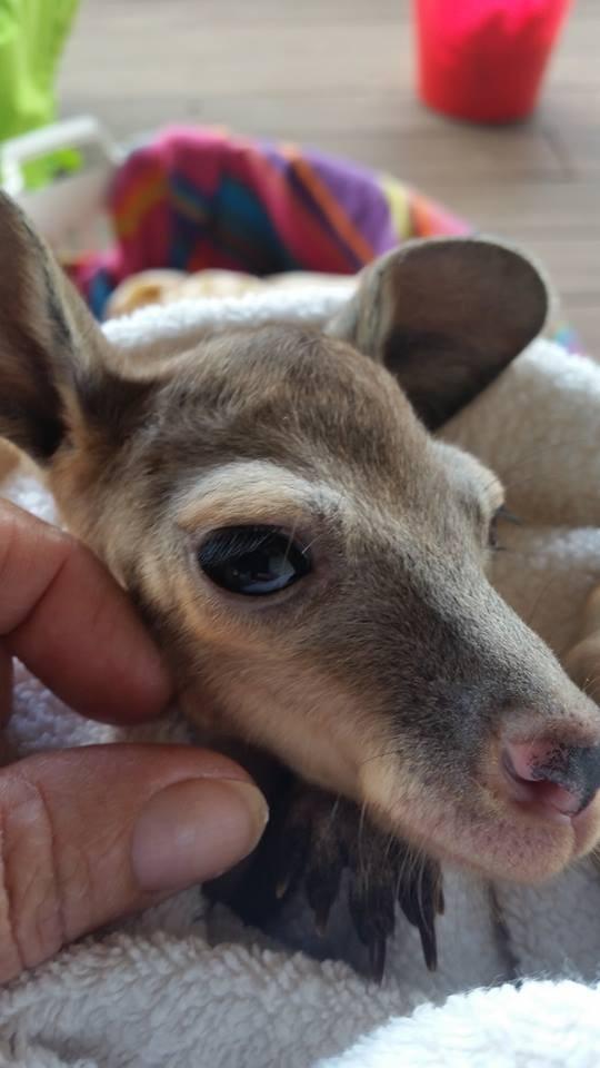 Australiana-cuida-canguros 3