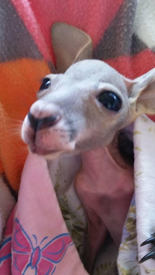 Australiana-cuida-canguros 6