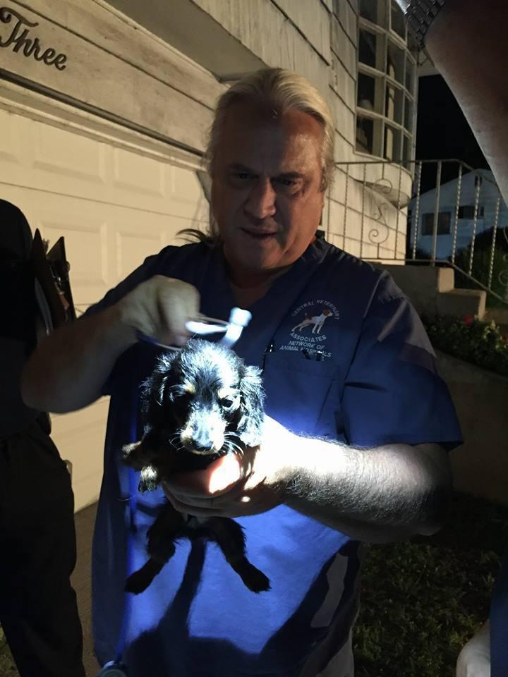 Autoridades descubren y rescatan 27 perros Dachshunds en una casa 1