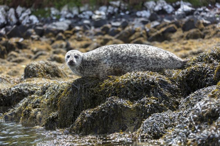 Bebe-foca 3