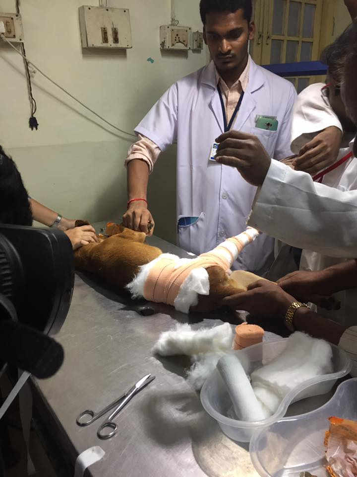 Bhadra-perrito-recuperado 2