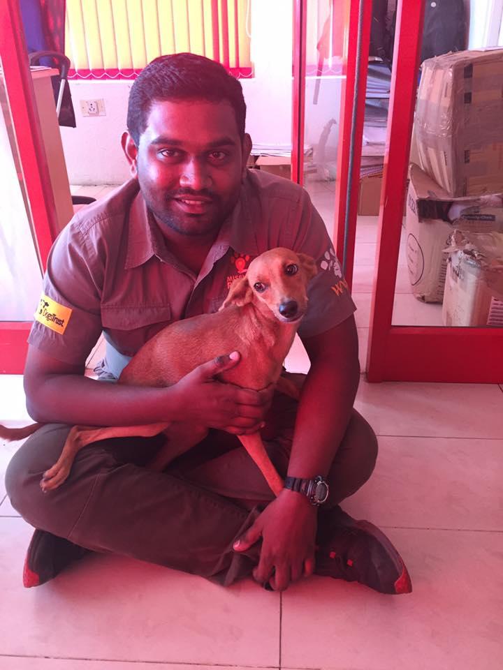Bhadra-perrito-recuperado 3