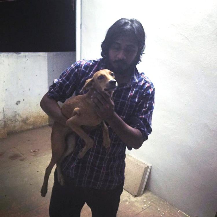 Bhadra-perrito-recuperado 4