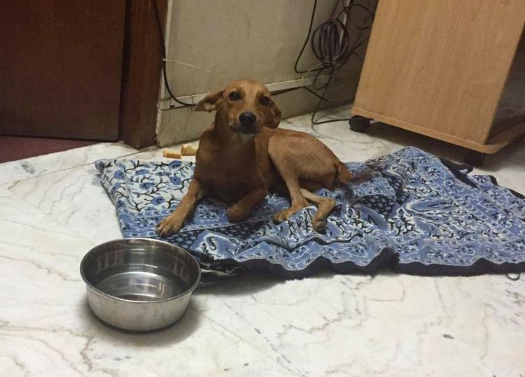 Bhadra-perrito-recuperado 5