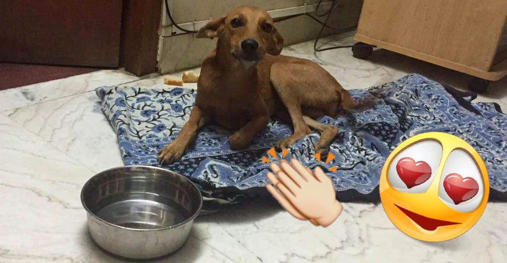 Bhadra-perrito-recuperado-portada
