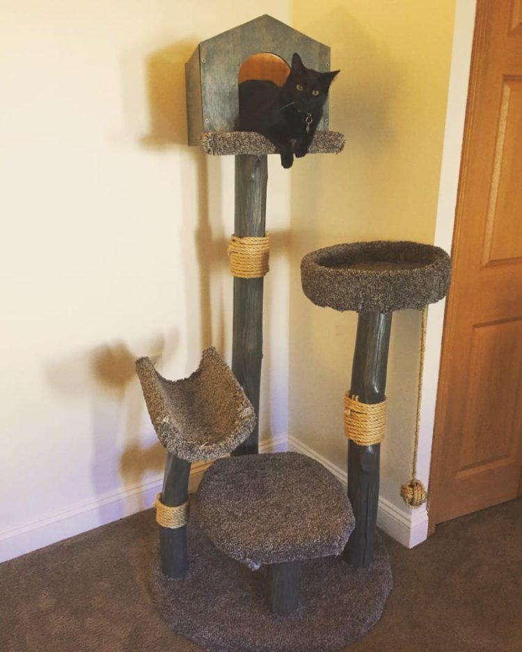Casa de gato 11