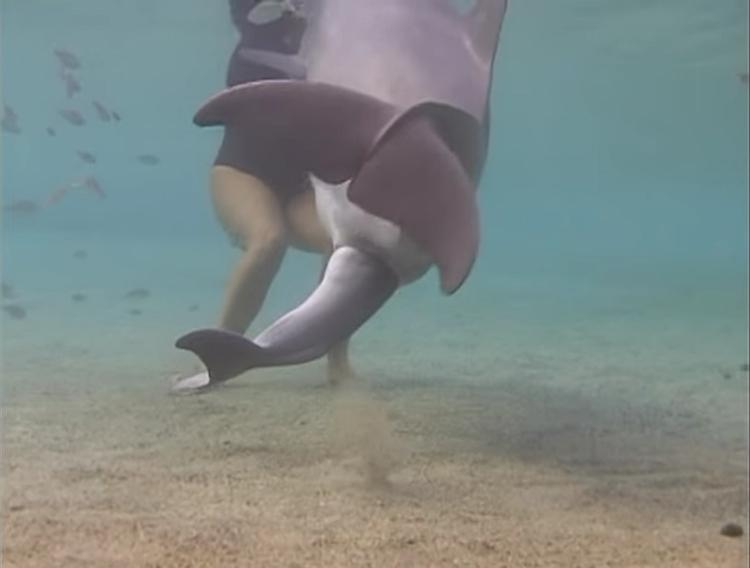 Delfin-da-a-luz 2
