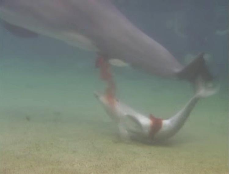 Delfin-da-a-luz 5