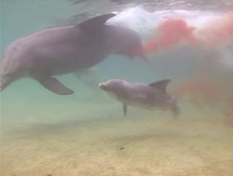 Delfin-da-a-luz 6