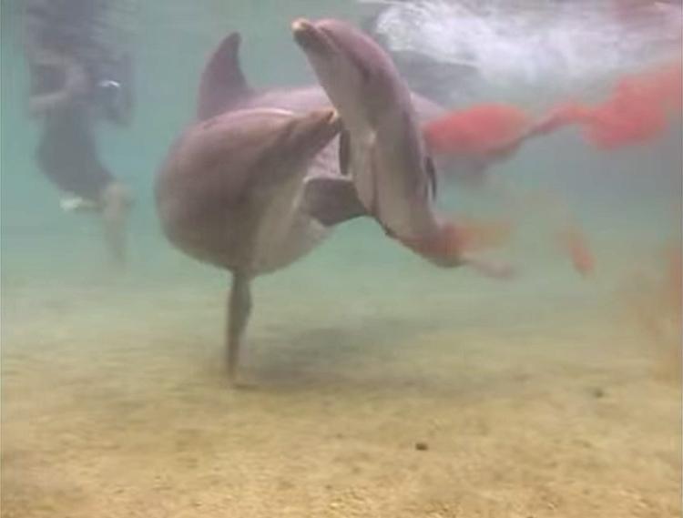 Delfin-da-a-luz 7