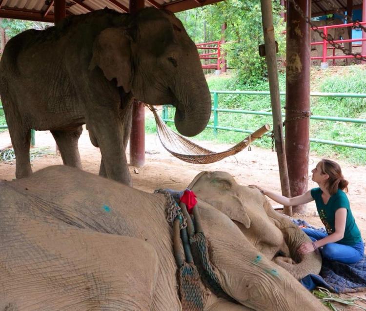Elefanta-Sao-Noi-murio 1