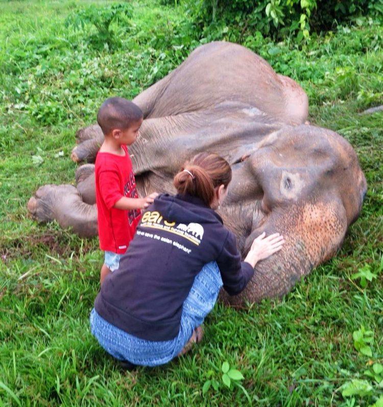 Elefanta-Sao-Noi-murio 10