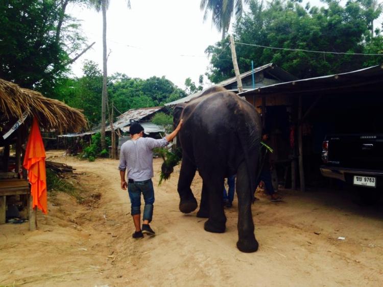 Elefanta-Sao-Noi-murio 12
