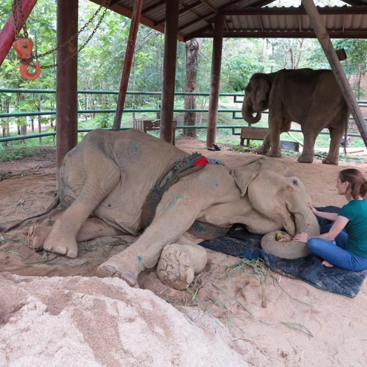 Elefanta-Sao-Noi-murio 6