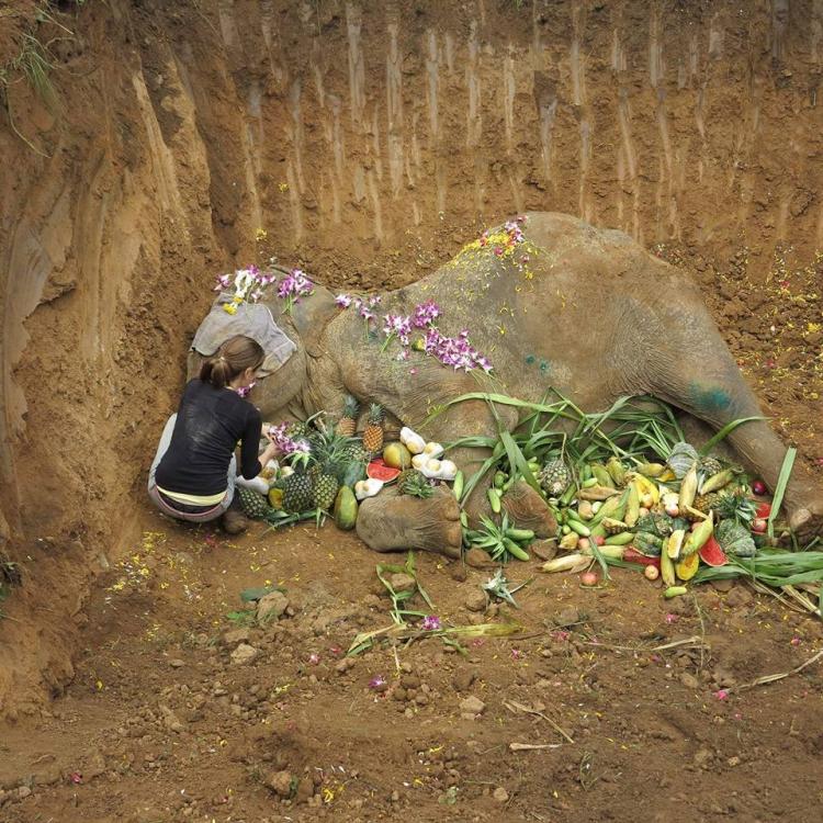 Elefanta-Sao-Noi-murio 8