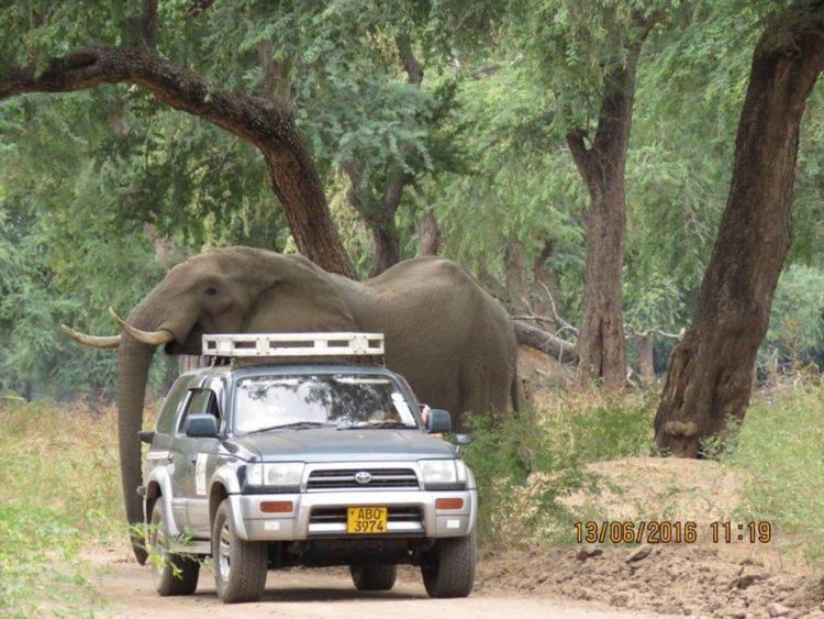 Elefante-herido-de-bala 2