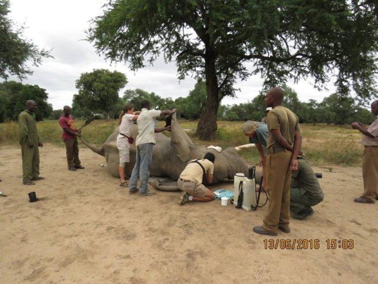 Elefante-herido-de-bala 8