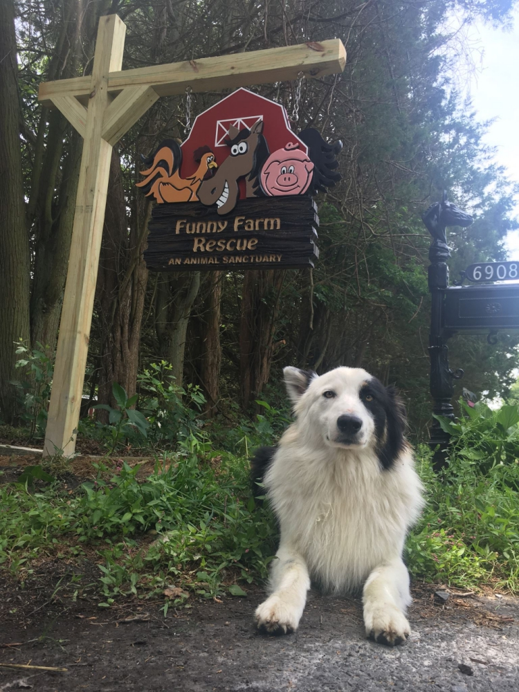 Farley-perro-refugio-NJ 1