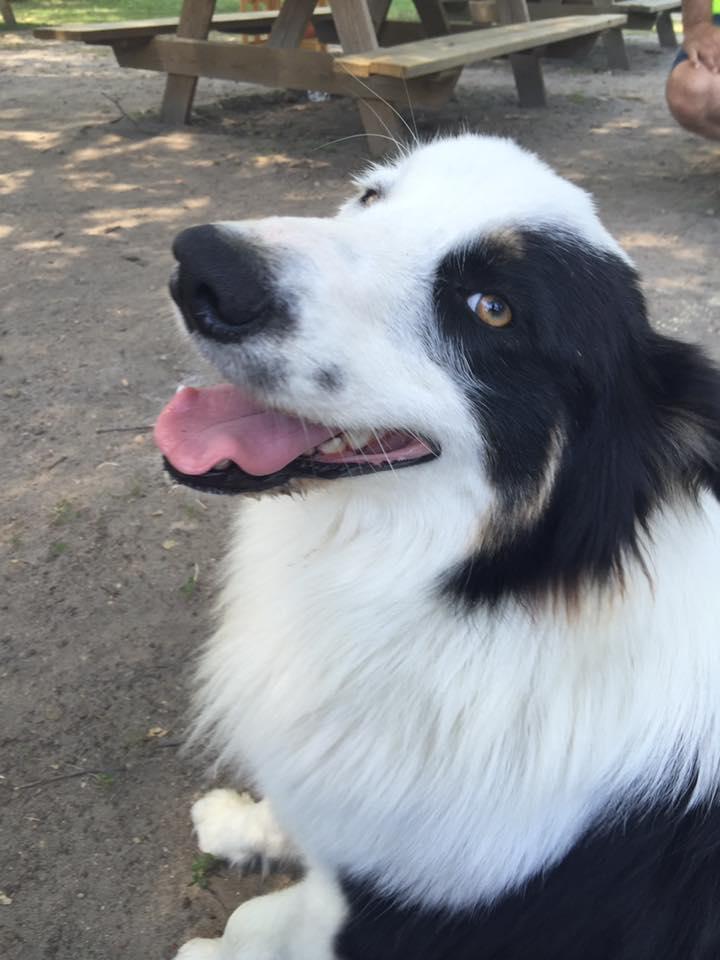 Farley-perro-refugio-NJ 10