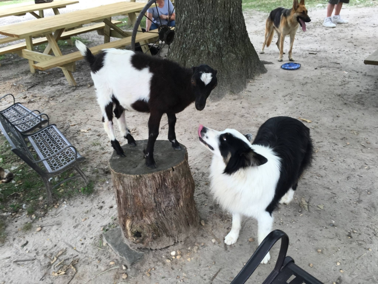 Farley-perro-refugio-NJ 12