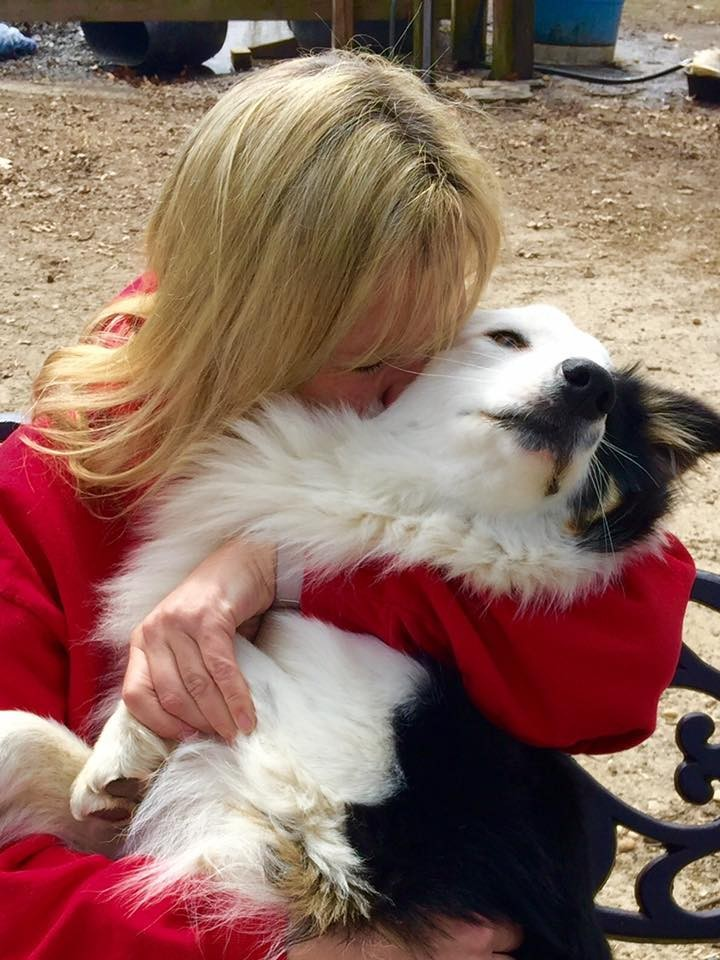Farley-perro-refugio-NJ 3