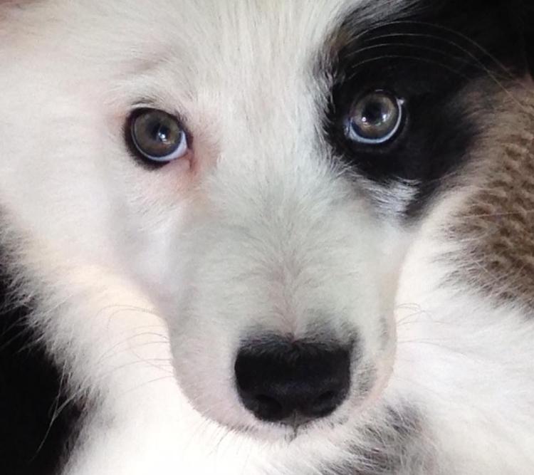 Farley-perro-refugio-NJ 8