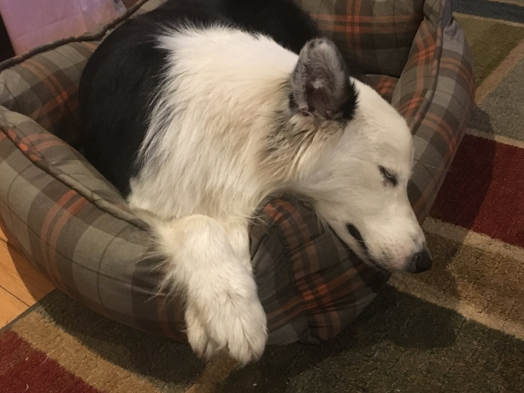 Farley-perro-refugio-NJ 9