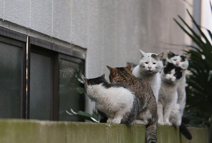 Fotografo japones caras de gatos 5
