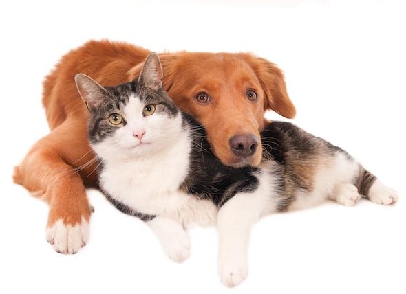 Gato y perro 1